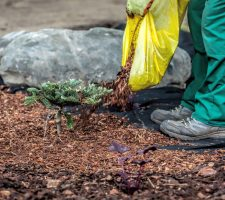 mulch protecting and adding to design look for gardens