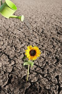 dry loam soil can still grow strong plants at home